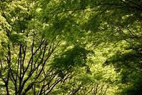 瀬戸内ドライブ☆ひろしま遊学の森 - できる限り心をこめて・・Ⅲ