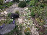サギゴケ点在 - natural garden~ shueの庭いじりと日々の覚書き