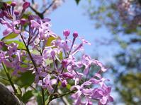 たけなわな春の花木 - park diary