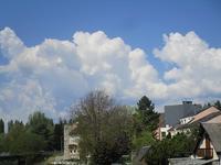 穀雨の日、カッコウが鳴く - フランス Bons vivants des marais Ⅱ