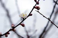 春到来 - 空 -Sora-