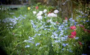 サカタの「フラワーガーデン」シリーズによる春の花畑 - 世話要らずの庭