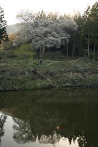 備北花巡り2019.4.20その2森湯谷のエドヒガン - 猫の畳返し