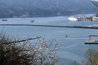 港とコブシ - マスター写真館2