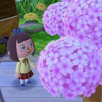 日立の桜 - のんびりタルトパイ日記第2巻