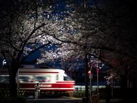 桜とこうや号を撮りにいこうや - 鉄道撮影メモ用