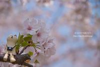 桜の下で - 日々の欠片を紡ぐ日々