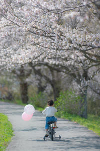 春風に吹かれて。。。 - 気ままにお散歩