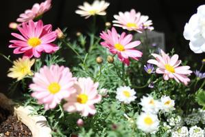 ちょこっとお買い物 - my small garden~sugar plum~