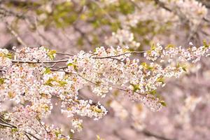 第10回ナガセケンコー旗争奪春季二本松大会 安達中 - Tax-accountant-office ソフトボールブログ