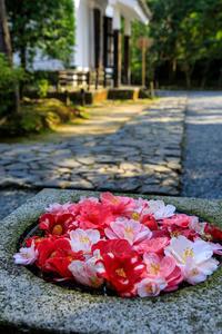 法然院・椿の花手水鉢 - 花景色-K.W.C. PhotoBlog