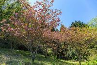 野草と山を見ながら頭高山へ - あだっちゃんの花鳥風月