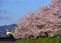 今週も桜を追って@会津 - 鉄ちゃん再開しました