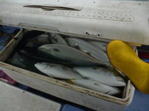 氷がほしいよ。 - 海王流|鳥取県赤碕の遊漁船「海王丸」