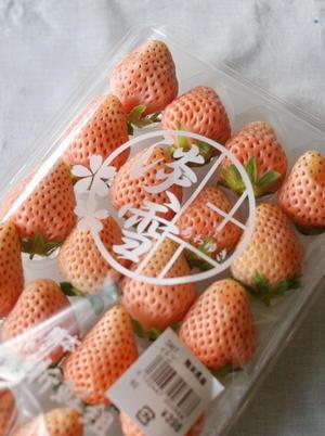 白いイチゴ『淡雪』(熊本県産) - sweet+