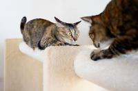大興奮の顔 - 猫と夕焼け
