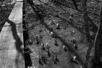 水芭蕉咲く森 - フォトな日々
