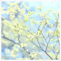 梅の実と想い出 。°* - かめらと一緒*