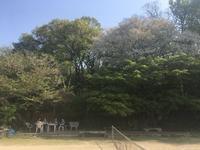 山桜の下で お花見 - 旅と数学  それとdiy