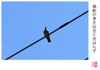 風船の青きは空と交はらず - 風と光の散歩道、有希編2a