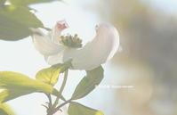 """ちょっぴり・・早起き"""" - 花々の記憶  happy momo"""