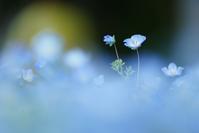 希望 - PhotoWalker*