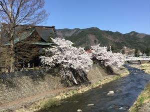 桜に🌸特別な思いはないけれど - 弥生、スコットランドはエジンバラ(エディンバラ)発!