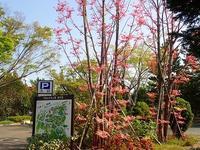 ピンク色の次は何色 - 手柄山温室植物園ブログ 『山の上から花だより』