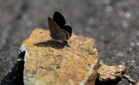 晩春 - 紀州里山の蝶たち