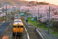 駅と桜(金光駅) - 浅口いいじゃん!写真展WEB