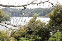 バス釣りで有名な雄蛇ヶ池 - 東金、折々の風景