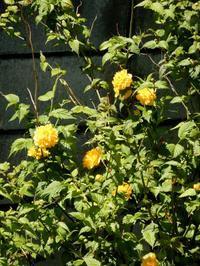 長年咲く花 - 【出逢いの花々】