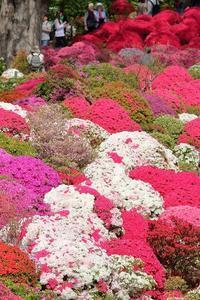 赤、ピンク、紅、根津神社のつつじ苑(後半) - 旅プラスの日記