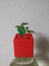 トマト - Lock-design.