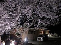 夜桜花見焼肉会 - 安曇野建築日誌