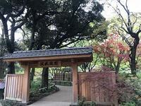横浜公園の花&中華街 - つれづれ日記