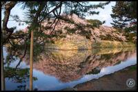 彦根城の桜2019 - びっと飴
