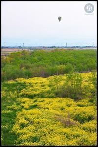 揖斐川の菜の花 - びっと飴