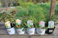穀雨の時期ですが・・・。:16日〜22日 - 週刊「目指せ自然農で自給自足」