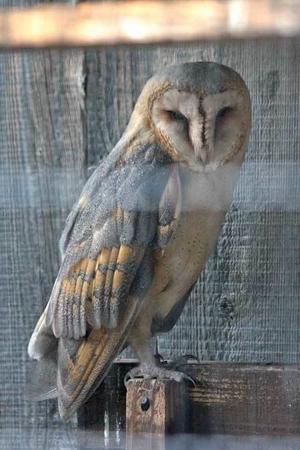 メンフクロウとアオダイショウ(井の頭自然文化園 August 2018) - 続々・動物園ありマス。