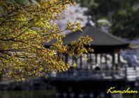 奈良の桜 - カンちゃんの写真いろいろ