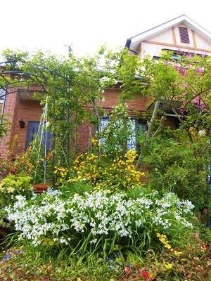 小さな庭の景色・・・ -
