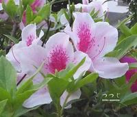 緑の館 - HAIKU/summer PHOTO