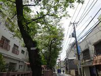 八重桜を見に・・・ - マイニチ★コバッケン