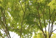 春本番!【センダイムシクイ・セッカ・ホオジロ・スズメ・ヒバリ】 - 鳥観日和