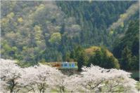 春の撮り鉄・樽見鉄道 - あ お そ ら 写 真 社