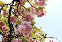 春のアウトドアランチ - pink pinko life