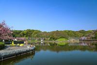 蓮華寺池の鯉のぼり - やきつべふぉと