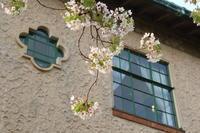 山手の桜 - 木洩れ日 青葉 photo散歩