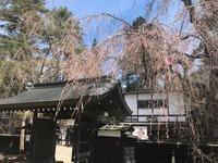 大型連休と角館の桜 - 仙北市農山村体験デザイン室